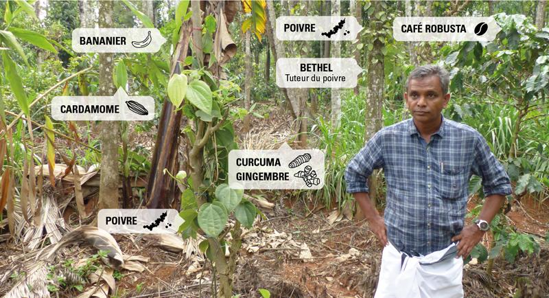 agroécologie intensive