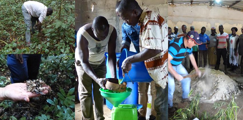 bio fertilisant SCEB cote d'ivoire