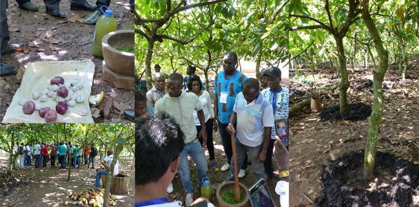 bio fertilisant cacao sceb