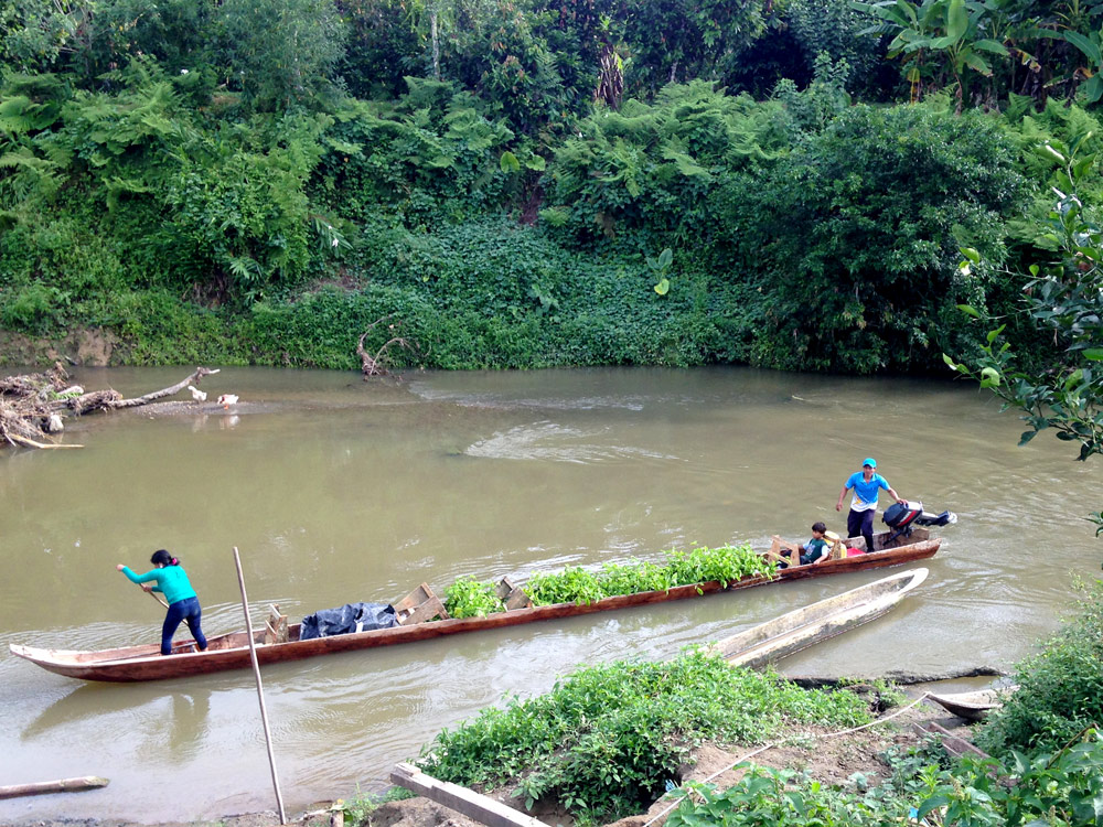 Transport des plants de Maracudja à la coopérative