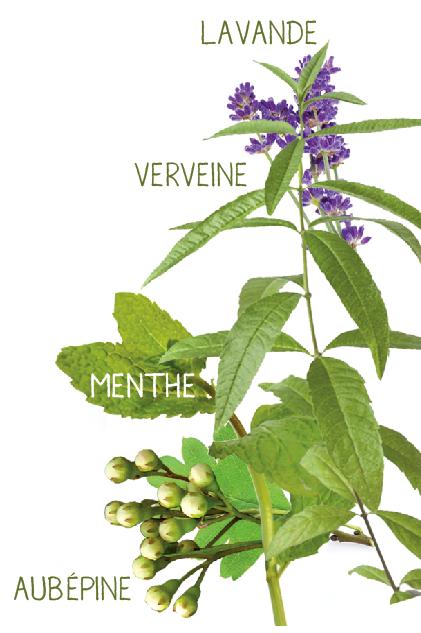 plantes aromatiques infusion détente