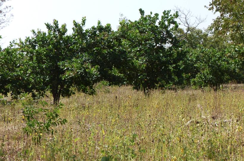 COOPAKE-cajou-bio-equitable-ethiquable