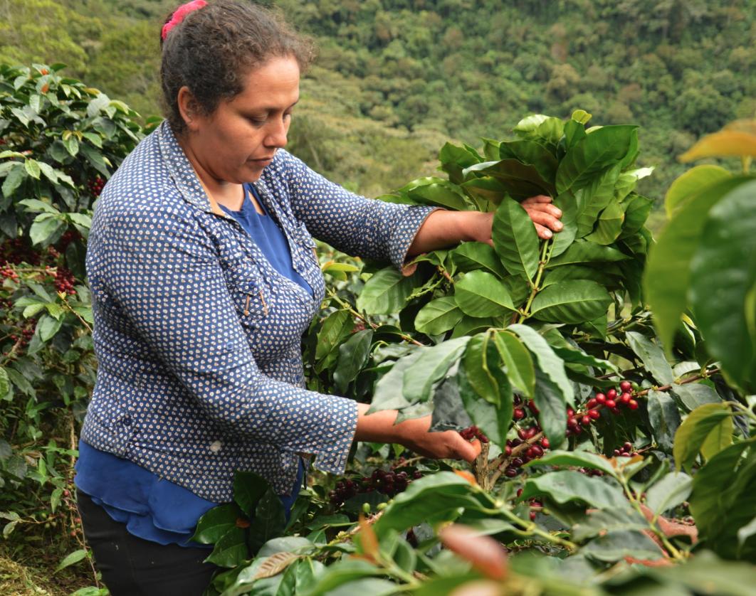 productrice café ethiquable pérou