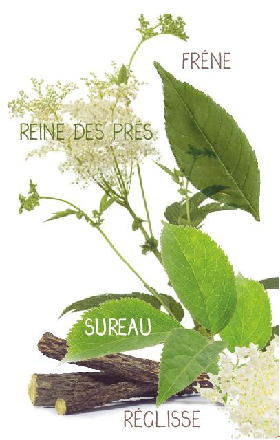 infusion detox plantes