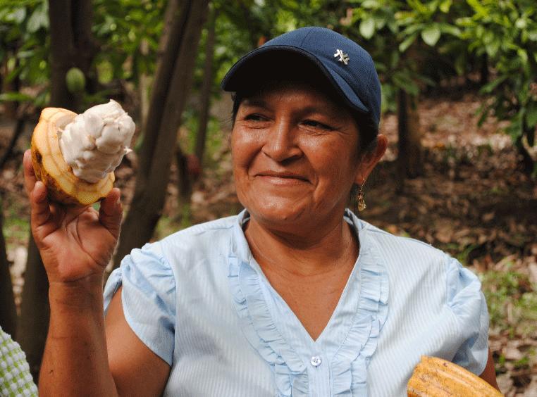 norandino perou cacao