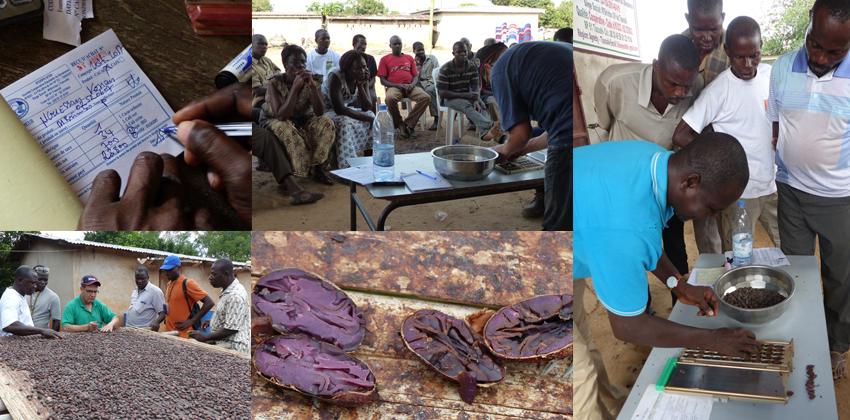 sceb tracabilite sechage qualité cacao cote d'ivoire